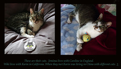 2 cats in bed (Room With A View) Tags: birthday art pairs dyptich carolineme