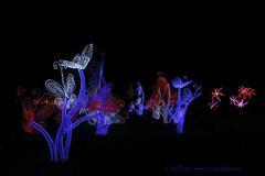 _C0A8697REWS New Plants,  Jon Perry, 3-3-16 zas (Jon Perry - Enlightenshade) Tags: color colour night chinesenewyear lanterns coloredlights chiswick chineselanterns chiswickhouse colouredlights 3316 jonperry chiswickhouseandgrounds chiswickhousegrounds enlightenshade arranginglightcom magicallanternfestival 20160303