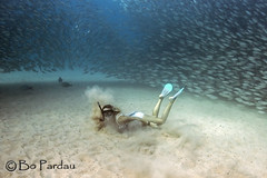 Free-dive Photo-shoot with Sandy Hammel. (bodiver) Tags: ocean hawaii outdoor ambientlight wideangle freediving reef kailua freedivers akule
