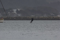 IMG_2506 (armadil) Tags: beach beaches mavericks kitesurfers windsurfers californiabeaches