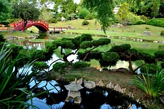 Le jardin (Daniel.Lgnes) Tags: bridge argentina garden puente japanesegarden buenosaires jardin ponte pont palermo jardinjapons barriodepalermo