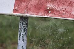 (107/366) Beeldrijm (134/365) (MJ Klaver) Tags: fence photoaday m42 135mm spinnenweb sonnar carlzeissjena primelens project365 oldlens ausjena manualfocuslens project366 day107366 carlzeissjenasonnar135mm ddrlens 366the2016edition 3662016 carlzeissjenasonnar135mmf35mcred 16apr16