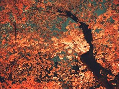 Hanami 2016: Sakura at Night (Jon-F, themachine) Tags: park flowers plants plant flower nature japan asian outdoors flora asia parks olympus nagoya  cherryblossom  sakura cherryblossoms nippon japo oriental  orient  fareast  aichi nihon hanami  omd     chubu japn     2016 m43  mft  tsurumaipark   mirrorless  chuubu   tsurumapark micro43 microfourthirds  ft xapn jonfu  mirrorlesscamera snapseed   em5ii em5markii