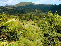 Pass me that machete (oobwoodman) Tags: path hike trail jungle caribbean sentier stlucia naturewalk pfad carabes westindies karibik saintlucia tetpaul