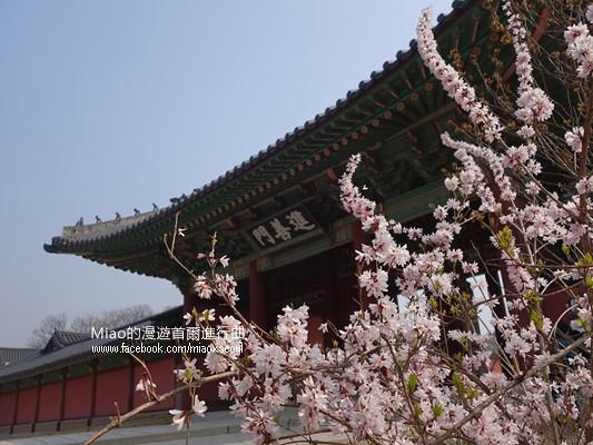 창덕궁-봄45