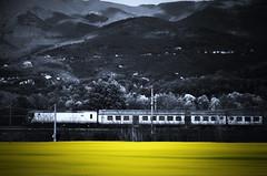 passaggi veloci (Camillo diB ()) Tags: italia aprile toscana treno pratomagno valdarno colza localitcarresi