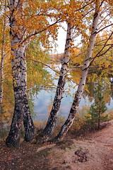 DSC_6066 (Rustam Bikbov) Tags: autumn september 2012    sverdlovskoblast