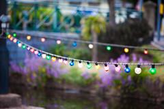 Dawlish Lights (Elliot Tratt) Tags: lighting street light plants plant streets water canon river eos devon rivers waters 5d dawlish 2015 southdevon 5dm2 5dmark2