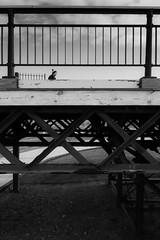 split-view (tabulator_1) Tags: blackwhite southportpier