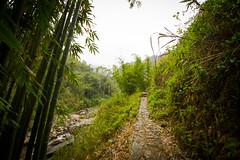 (c) Wolfgang Pfleger-2435 (wolfgangp_vienna) Tags: mountains rain trekking asia asien tour bamboo vietnam regen sapa bambus