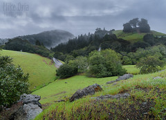 Mt. Tam in the Rain (mikeSF_) Tags: california road storm wet grass rain weather fog landscape rocks pentax cloudy outdoor marin bolinas hills muirwoods rainstorm mttam tamalpais sausalito hilly tam sealing waterproof mounttamalpais millvalley sealed pantoll resistant mikeoria 645z
