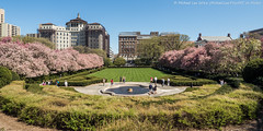 Conservatory Garden (P4171246) (Michael.Lee.Pics.NYC) Tags: trees newyork spring cityscape centralpark blossoms olympus uppereastside crabapple mkii markii conservatorygarden em5 918mm