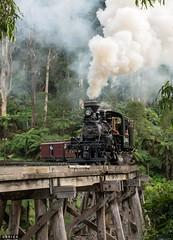 Trestle (Dobpics O'Brien) Tags: trestle bridge train engine rail railway victoria steam pbr locomotive belgrave climax puffingbilly 12a 1694 pbps