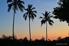 (Constance Trott) Tags: sunset brazil rio brasil riodejaneiro rj cidademaravilhosa prdosol praiadeipanema constance ipanema jogosolmpicos olimpicgames ipanemabeach olimpadas rio2016 prdosolnoriodejaneiro prdosolnorio constancetrott