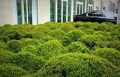 ONDA VERDE..... (Skiappa.....v.i.p. (Volentieri In Pensione)) Tags: auto verde lumix strada panasonic palazzo onde berlino siepe ondaverde caseggiati skiappa