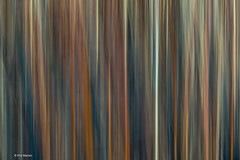 Abstract caused by intentional blur of vegetation in Leslie Street Spit (Phil Marion) Tags: travel wedding boy vacation people woman hot sexy ass beach girl beautiful beauty sex canon naked nude nipples slim boobs nu candid dick young hijab nackt explore teen tranny xxx chubby plump  burqa nudo desnudo  nubile telanjang schlampe    5photosaday explored  thn nijab    kha    malibog    philmarion         saloupe