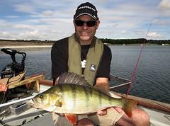 Perch 3 (TheLureBox) Tags: perch pike zander pikefishing perchfishing lurefishing zanderfishing predatorfishing