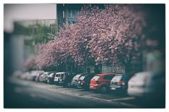 City (Chragn) Tags: auto street city urban tree cars car 35mm germany deutschland 50mm nikon europa europe parking stadt nrw nikkor parkplatz blte ruhrgebiet baum dortmund frhling dx ruhrpott kirschbaum strase nikond300s nikkorafs35mmf18ged