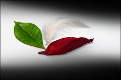 Italia Libera (Giuseppe Tripodi) Tags: macro freedom italia festa lotta libert simbolo tricolore resistenza 25aprile tradizioni