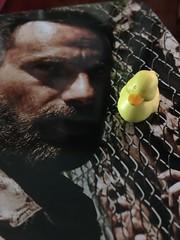 Day 112 of 366 - Duck Grimes (sluggoman) Tags: day112 walkingdead twd 366days 366daysproject rickgrimes