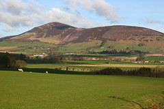 Tinto Hill and sheep, 23-4-2016 (Plane Buddy) Tags: scotland scenery hill tinto lanarkshire