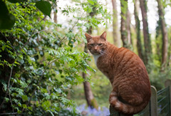 casper cat (foorel) Tags: cat pussycat
