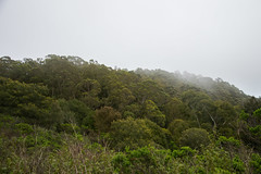 Hill View - Tilden Regional Park - Contra Costa County - California - 19 March 2016 (goatlockerguns) Tags: sanfrancisco california park county usa costa west nature oakland coast san view natural unitedstatesofamerica pablo reservoir bayarea eucalyptus eastbay concord contra regional tilden eucalyptustree