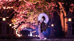 艶やかに夜を舞う (のの♪) Tags: 桜 dd 神社 着物 八重桜 和傘 dollfiedream