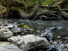 Petit Ruisseau (Yo Gui) Tags: nd