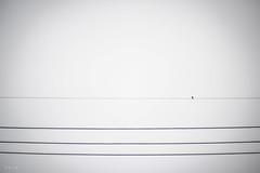 lonely bird (andidrew) Tags: digital 50mm nikon taiwan taichung af nikkor ai 50mmf14 50mmf14d d700 135digital nikonnikkordlens
