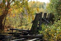 DSC_6031 (Rustam Bikbov) Tags: autumn september 2012    sverdlovskoblast