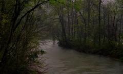 a happy rainy day (Alvin Harp) Tags: trees nature river march travels rainyday tennessee natur peaceful overcast journey mystic 2016 naturesbeauty rainsplatter teamsony sonya7rii alvinharp