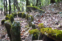 Mawphlang Sacred Grove1 (Hrishi the experimentor) Tags: india forest religious sacred northeast groves monoliths rituals meghalaya mawphlang