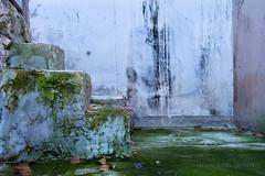 Escalera (miguelangelortega) Tags: city white musgo verde blanco ancient ciudad escalera antiguo escalones sucio geometra hmedo ltytr2 ltytr1 musgoso