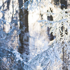 Crisp light (EmmaAndersson) Tags: winter light sunlight white cold nature landscape photography daylight crisp narnia dreamy fineartphotography