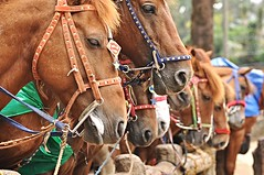 horseback riding wright park (DOLCEVITALUX) Tags: park horses fun philippines baguio recreation horsebackriding baguiocity recreationalfacility