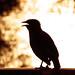 Against the sky. Bird's silhouette