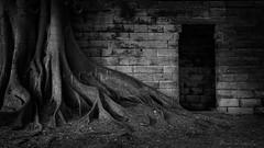 Sydney Weekend (Aurorajane) Tags: ocean city light summer urban hot tree water skyline dawn sandstone 2000 skyscrapers fig harbour salt sydney icon nsw heat humid seaspray kirribilli milsonspoint 2061 highdensity mrsmacschair barangaroo
