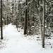 Mais trilhas pela floresta