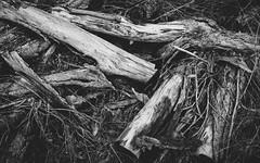 Sticks (sullivja81) Tags: wood blackandwhite forest sticks earth
