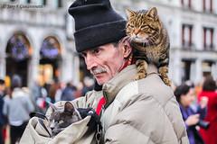 venice cats (JANY FEDERICO GIOVANNINETTI) Tags: life people gente persone age reality easy giostra vita exist momenti espressioni facile sentimenti esistere realt et