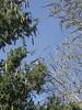 Two Trees and Bird (cobalt123) Tags: arizona canon tucson firstphotos age11 2016 anavey tucsonrockandgemshow xti canonrebelxti anaveybolender