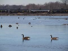 IMG_8828 (jacorbett70) Tags: canada philadelphia skyline train river geese newjersey nj trains goose oil delawareriver oiltrains