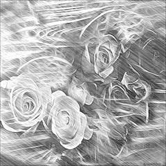 Time of roses (Cleide@.) Tags: roses brazil bw  abstract flower art texture digital photo exotic 2016 ps6 artdigital sotn awardtree cleide netartii