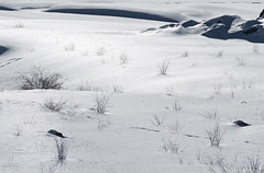 Snowscape (Quincey Deters) Tags: winter snow canada nature monochrome horizontal landscape jasper day outdoor january foliage alberta northamerica allrightsreserved jaspernationalpark d300 2016 medicinelake canadianrockymountains 18mm200mm quinceydeters