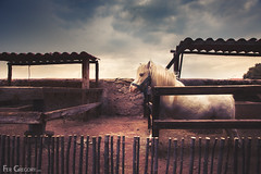 Pony (Fer Gregory) Tags: wood sky horse animal barn mexico wooden little cloudy teotihuacan dramatic mexican pony fotografia gregory stable mexicano fer fotografo reino establo teohtihuacan reinoanimal fernandogregory fergregory