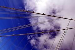 DSC_3274-61 (jjldickinson) Tags: bridge sky music cloud walking suspension hiking cable electronicmusic baybridge suspensionbridge interstate80 tollbridge nikond3300 selfanchored sanfranciscooaklandbaybridge wikigong selfanchoredsuspensionbridge baybridgetrail promaster52mmdigitalhdprotectionfilter nikon1855mmf3556gvriiafsdxnikkor 104d3300