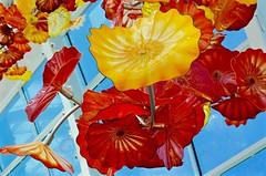 DSC_1705 (erica.hendershot) Tags: seattle chihuly tourism glass skyline garden washington place market pike pikeplace vibrantcolors seattlewashington glassexhibit chihulygardenandglass chihulygarden