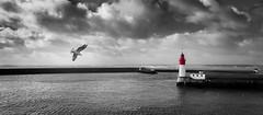 Le Guilvinec (Lollivier Stphane) Tags: sea mer port rouge nikon noir bretagne tokina explore desaturation 29 blanc phare mouette finistre guilvinec