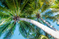in the shade (DominiquePelletier.ca) Tags: vacation sky tree beach san warm coconut palm resort bahia dominicaine riosanjuan republicpuerto principedominican platario juanespaillatrpublique